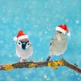 两只小的滑稽的鸟坐一个分支在雪的冬天 免版税库存照片