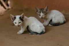 两只小的肮脏的小猫正在寻找一个爸爸 库存图片