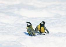 两只小的逗人喜爱的美丽的山雀在白色雪漂泊会集了  库存图片