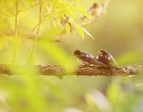 两只小的鸟燕子坐在池塘Sunn的一个分支 免版税图库摄影
