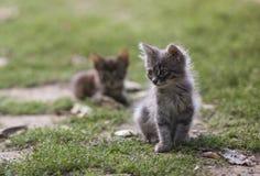 两只小镶边灰色小猫坐在背后照明的一个晴天 免版税库存图片