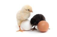 两只小鸡和两个鸡蛋 免版税库存照片