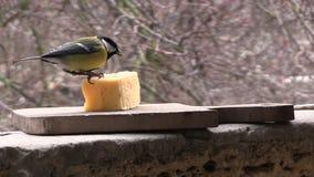 两只山雀吃乳酪 影视素材