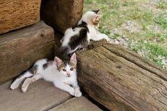两只幼小逗人喜爱的小的猫 免版税库存照片