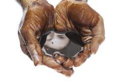 两只手托起与黑石油 免版税库存照片