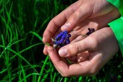 两只手接触对花的 库存照片