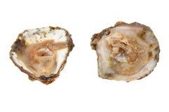 两只新鲜的牡蛎 免版税库存图片