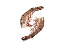 两只未加工的老虎虾 免版税库存图片
