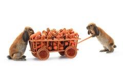 两只棕色兔子 免版税库存图片