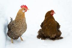 两只母鸡外面在雪 库存照片
