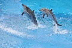 两只海豚跳出水 免版税库存照片