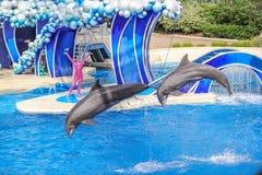 两只海豚跳 免版税库存图片