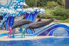 两只海豚跳 库存照片