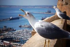 两只海鸥尖叫,抬他们的头在堡垒边缘由海 图库摄影