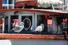 两只海鸥画象在一艘老生锈的船的 库存照片