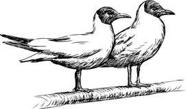 两只海鸥 免版税库存照片