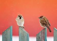 两只滑稽的鸟坐木篱芭在s的圣诞节 免版税库存照片