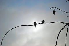 两只燕子剪影在树的 库存照片