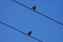 两只燕子 免版税图库摄影
