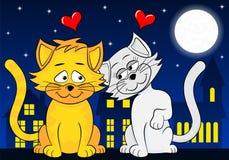 两只爱恋的猫 免版税图库摄影
