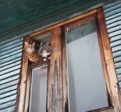 两只猫倾斜在窗口外面 免版税库存照片