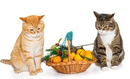 两只猫和圣诞节篮子 免版税库存图片