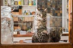 两只猫在厨房里 免版税库存照片
