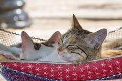 两只猫在吊床休息 免版税图库摄影