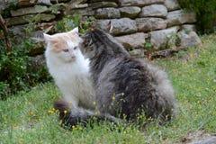 两只猫在庭院里 库存照片