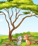 两只猫在森林里 库存图片