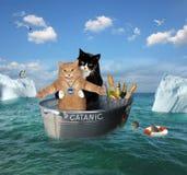 两只猫在洗衣盆漂移 免版税图库摄影