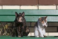 两只猫坐在砖墙前面的绿色长木凳 免版税库存照片