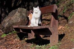 两只猫坐棕色长凳 库存图片