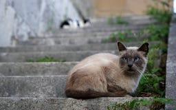 两只猫坐楼梯 图库摄影
