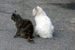 两只猫坐灰色沥青 图库摄影