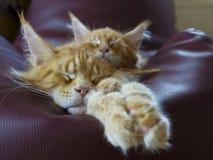两只猫放松 库存图片