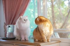 两只猫是恋人 图库摄影