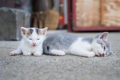 两只猫睡眠 库存图片