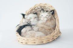 两只猫睡觉 免版税图库摄影