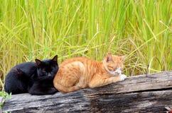 两只猫睡觉 免版税库存图片