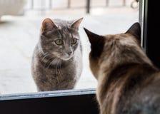 两只猫见面 库存照片