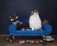 两只猫选择袜子坐长沙发 库存照片