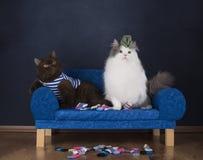 两只猫选择袜子坐长沙发 免版税库存图片
