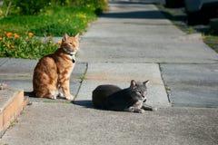两只猫,一灰色一,姜红色,朋友一起坐看在同一个方向的小径 免版税库存照片