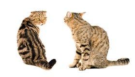 两只猫,看彼此 免版税库存照片