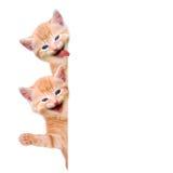 两只猫,笑和挥动 免版税库存照片