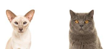 两只猫画象  免版税库存照片