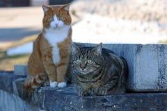 两只猫 库存照片