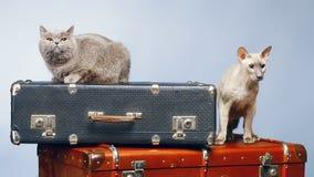 两只猫 免版税库存照片