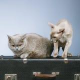 两只猫 库存图片